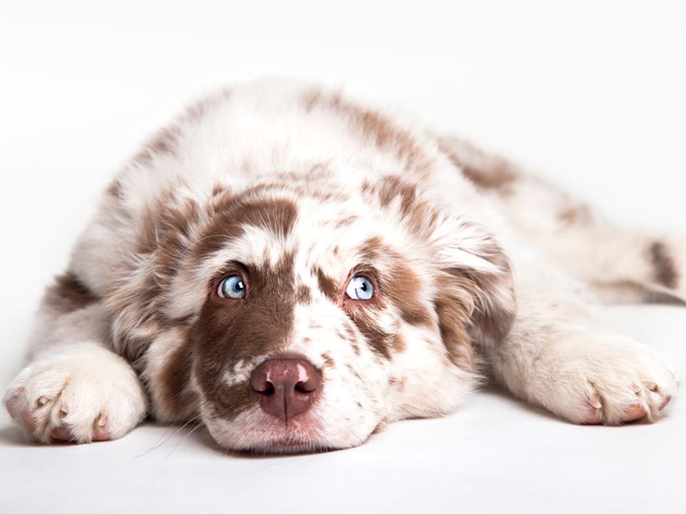 Tierarztpraxis Tribuswinkel Blogbeitrag Tiere sind kein Weihnachtsgeschenk