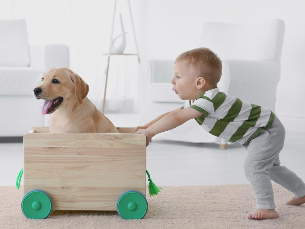 Tierarztpraxis Tribuswinkel Blogbeitrag Reise