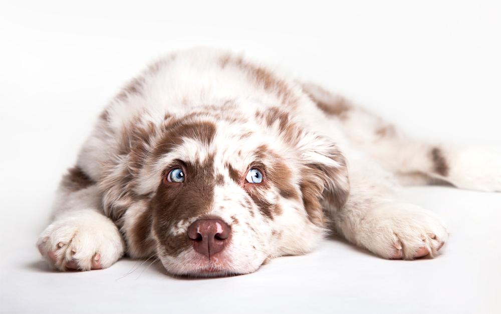 Tierarztpraxis Tribuswinkel Tierarzt Tierfoto